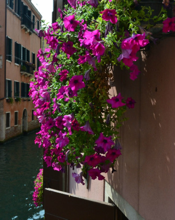 View of Venice Italy, Flowers in Venice Italy