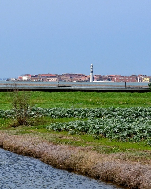 Sant'Erasmo Island in Venice, Garden Island of Venice Italy, Islands of Venice Italy, Venice Lagoon, Farming in Venice Italy, View of Murano, Artichoke Field in Vence,View of Venice Italy, OG Venice Travel Guide, Tours of Venice Italy, Seeing Venice Italy, What to See in Venice Italy